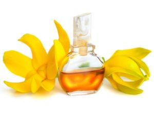Ylang Ylang Essential Oil For Sleep